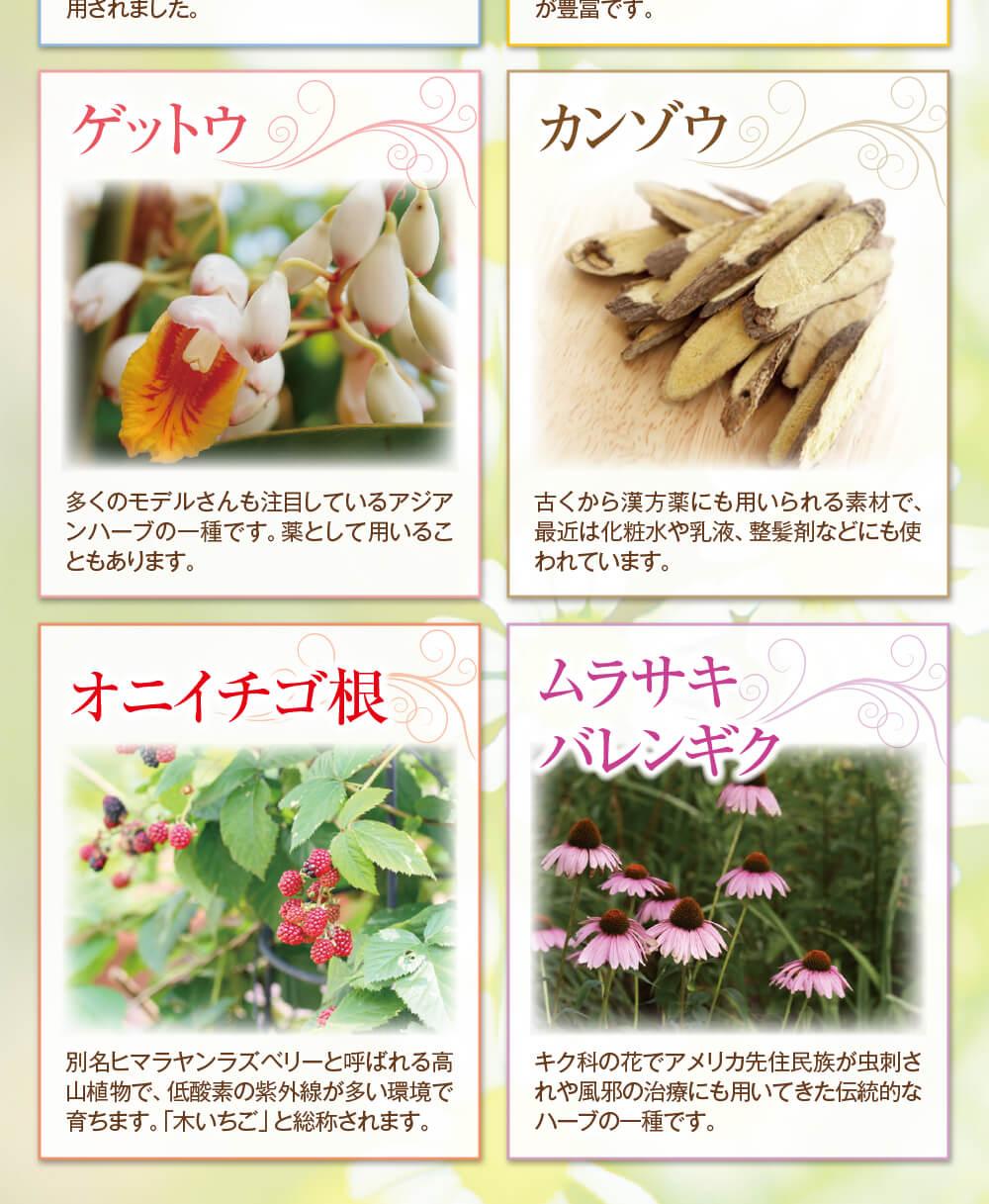 アジアンハーブの一種ゲットウ・漢方薬にも使われているカンゾウ・オニイチゴ根・伝統的なハーブの一種ムラサキバレンギク