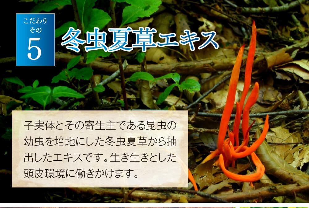 こだわりその5 冬虫夏草エキス 子実体とその寄生主である昆虫の幼虫を培地にした冬虫夏草から抽出したエキスです。生き生きとした頭皮環境に働きかけます。