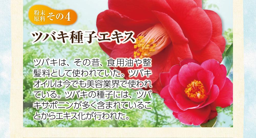 【粉末原料:その4】ツバキ種子エキス。ツバキは、その昔、食用油や整髪料として使われていた。ツバキオイルは今でも美容業界で使われている。ツバキの種子には、ツバキサポニンが多く含まれていることからエキス化が行われた。