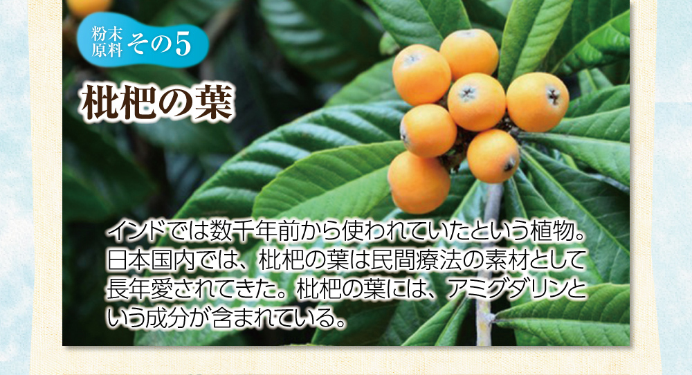 【粉末原料:その5】枇杷の葉。インドでは数千年前から使われていたという植物。日本国内では、枇杷の葉は民間療法の素材として長年愛されてきた。枇杷の葉には、アミグダリンという成分が含まれている。