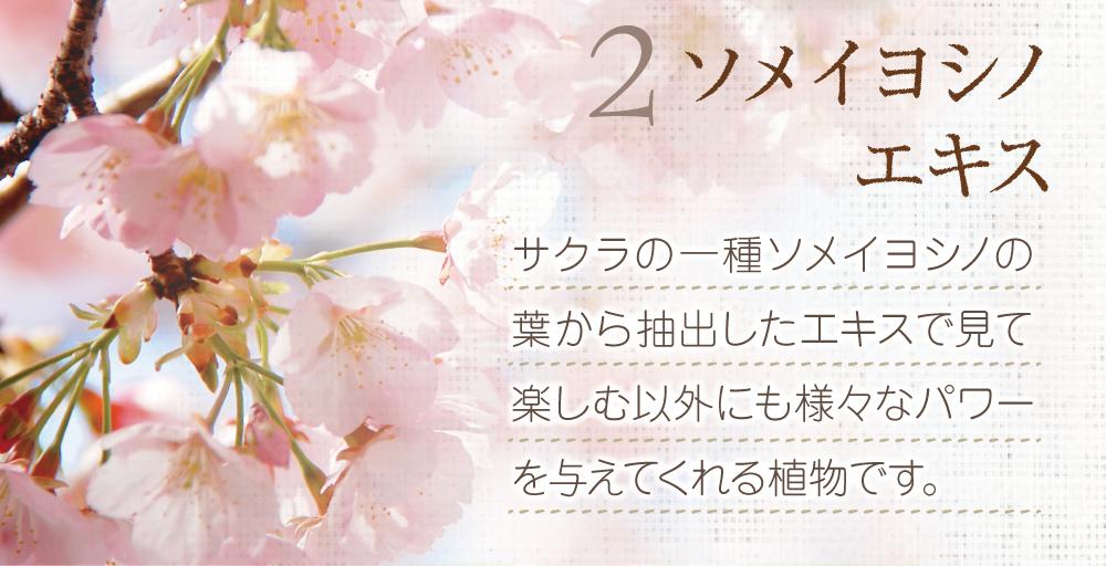 2.ソメイヨシノエキス。桜の一種ソメイヨシノの葉から抽出したエキス。