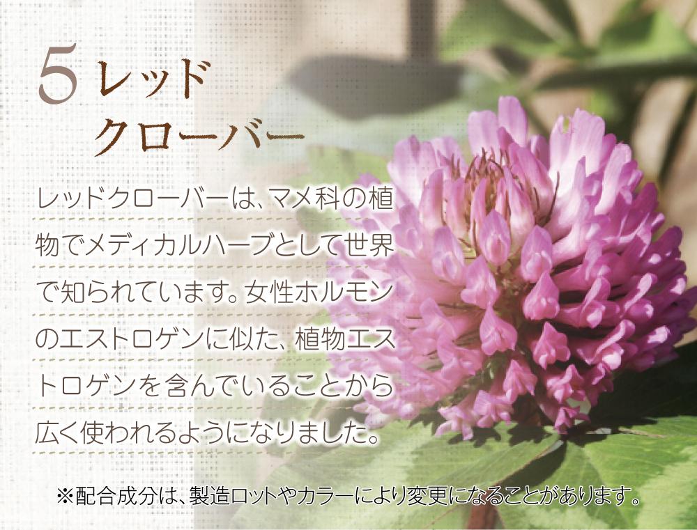 5.レッドクローバー。マメ科の植物でメディカルハーブとして世界で知られています。女性ホルモンのエストロゲンに似た、植物エストロゲンを含んでいることから広く使われるようになりました。